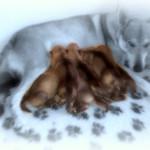 Cuccioli il 26-11-2015