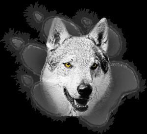 Logo Ezechielelupo