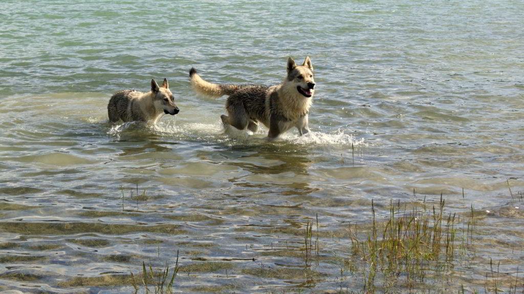 Bagno nel lago di Campotosto