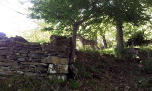 Ezechiele nel bosco a Campotosto