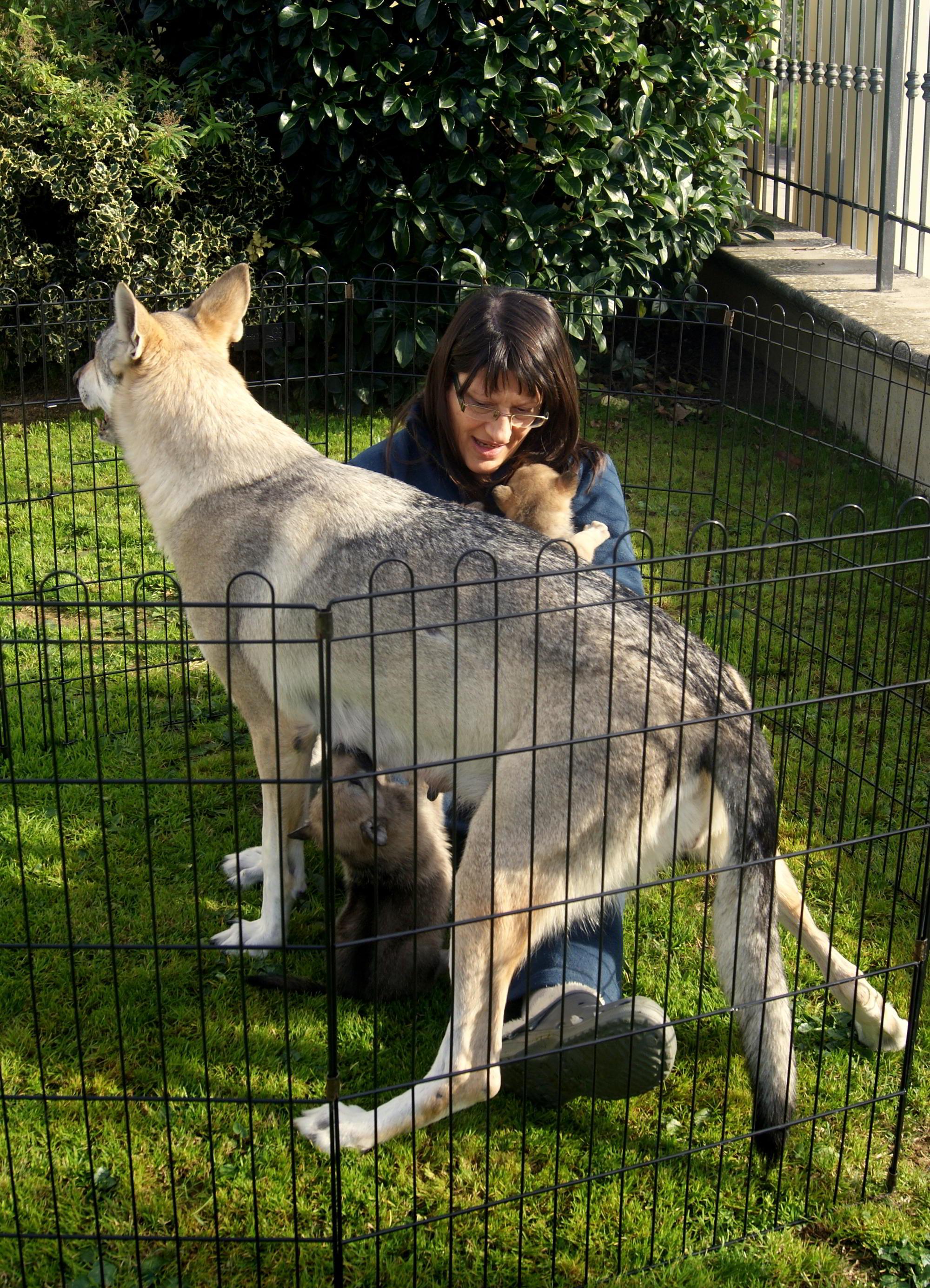 Litters Dog Breeding