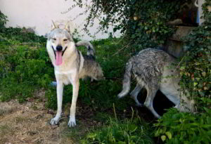 Apache e Grace
