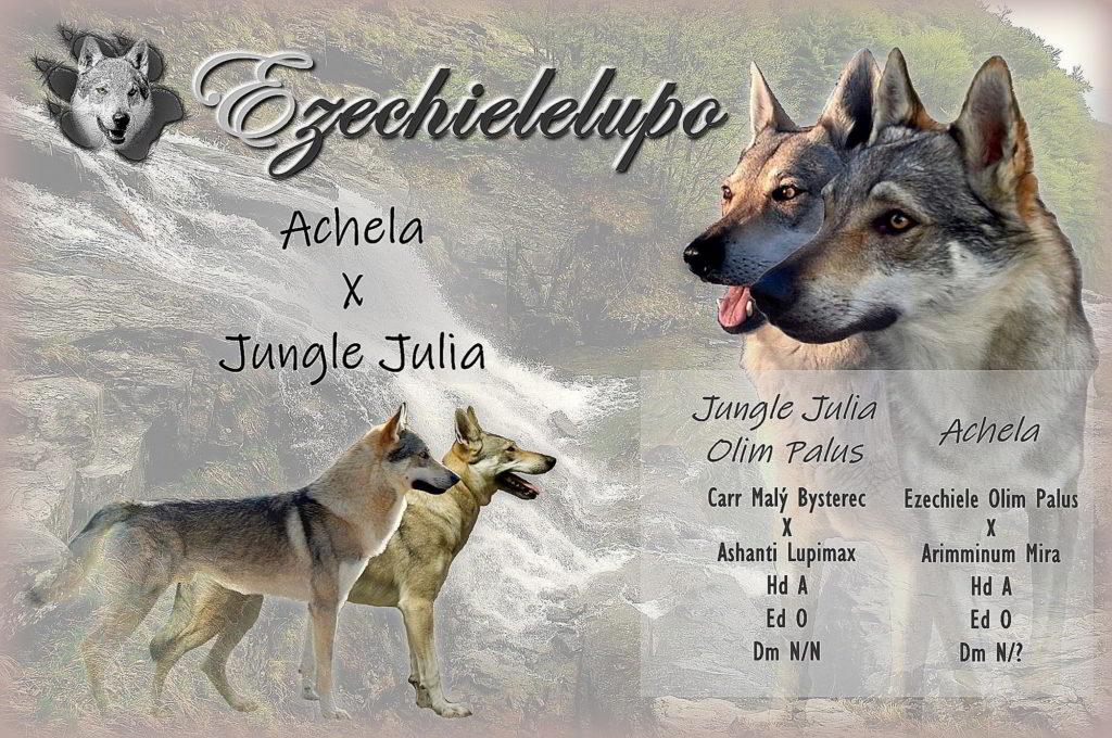 """Cucciolata """"K"""" Ezechielelupo - Achela X Jungle Julia"""