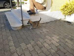 Cuccioli della cucciolata F Ezechielelupo
