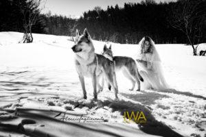 IWA Lupo web filigrana-60
