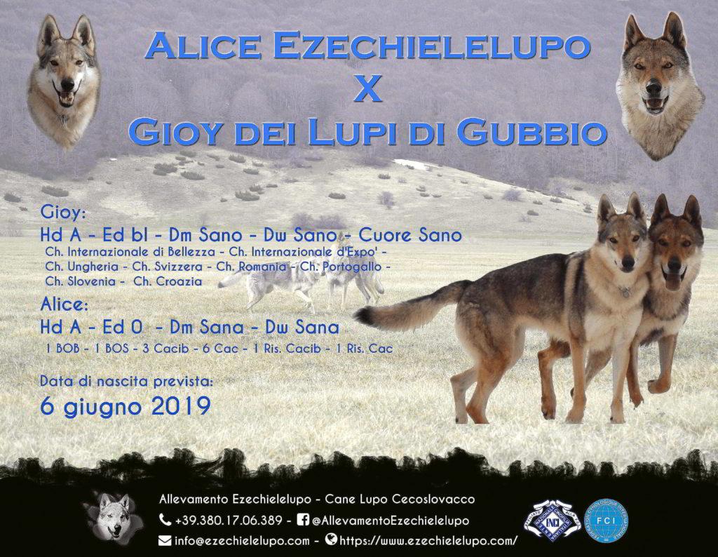 Alice X Gioy