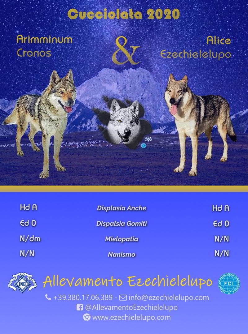 Alice X Cronos